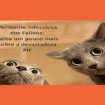 "Peritonite Infecciosa Felina: Saiba mais sobre a devastadora ""PIF"""