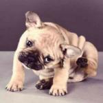 Pulgas e Carrapatos em Cães e Gatos: entenda melhor esse problema!