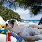 Cães e Gatos precisam usar Protetor Solar?
