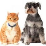 Obesidade em Cães e Gatos: Causas, Riscos e Tratamento!