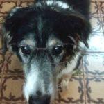 Síndrome da Disfunção Cognitiva em cães: Sintomas, tratamento e o que fazer!